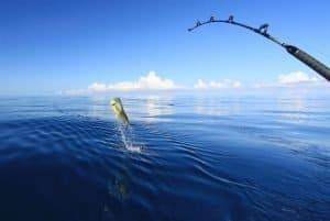 fishing header 1